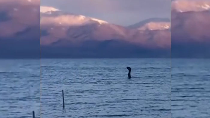 'Sea Monster' Captured on Video in Albania [VIDEO]
